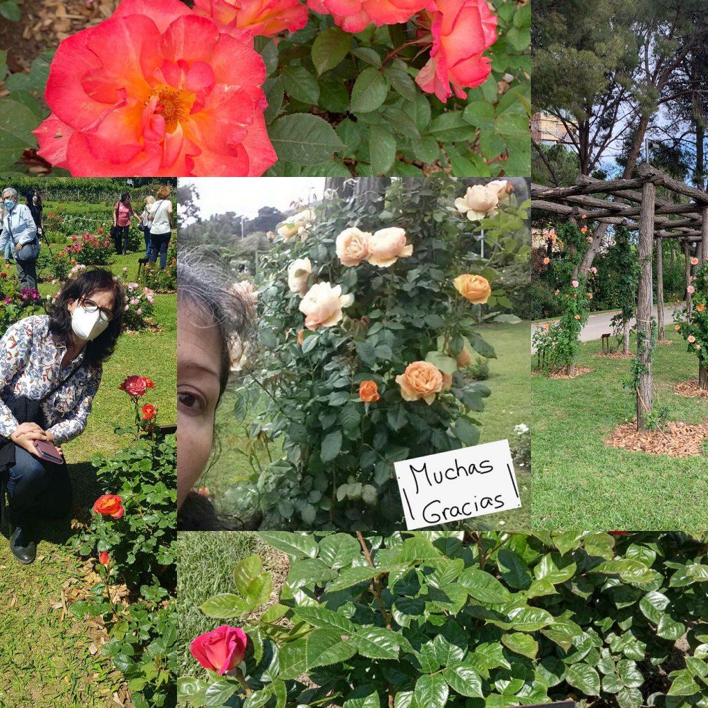 rosas nuevas, barcelona